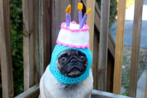Happy Happy Birthday Cake Dog Hat (made by Sweethoots, etsy.com)